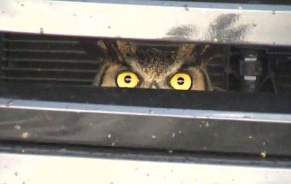 owl_food