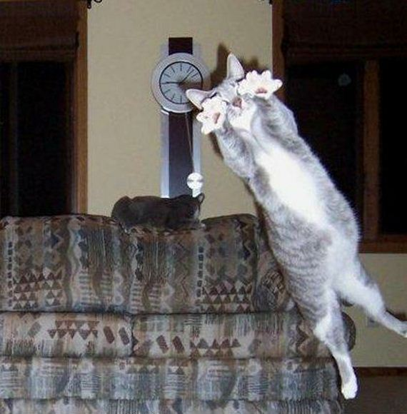 perfectly-timed-cat-photos