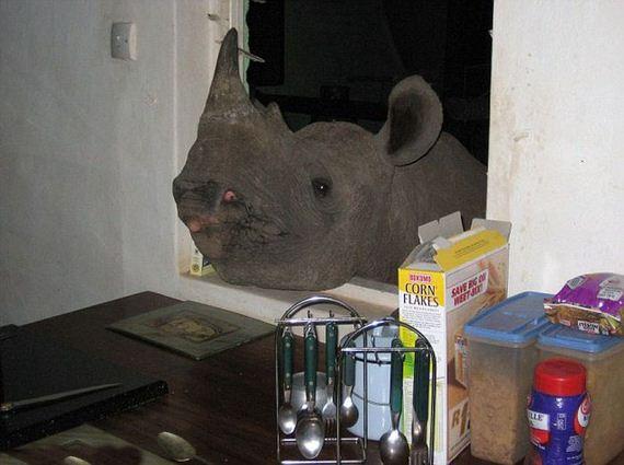 pet-rhino