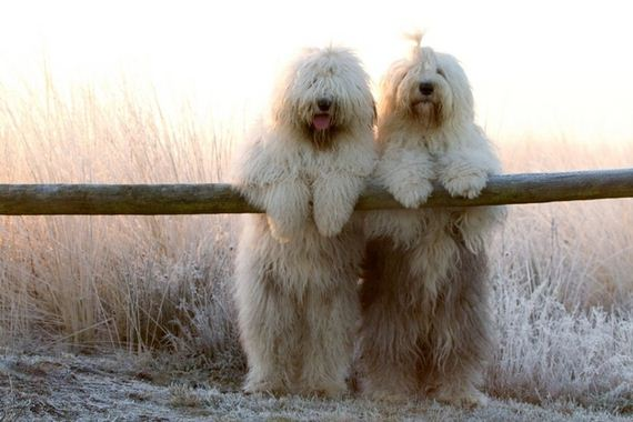 photogenic-sheepdogs