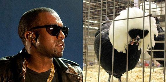 pop-stars-were-birds