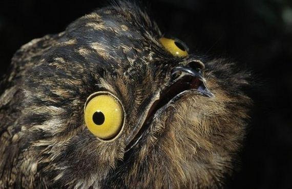 [Image: 12-potoo_bird.jpg]