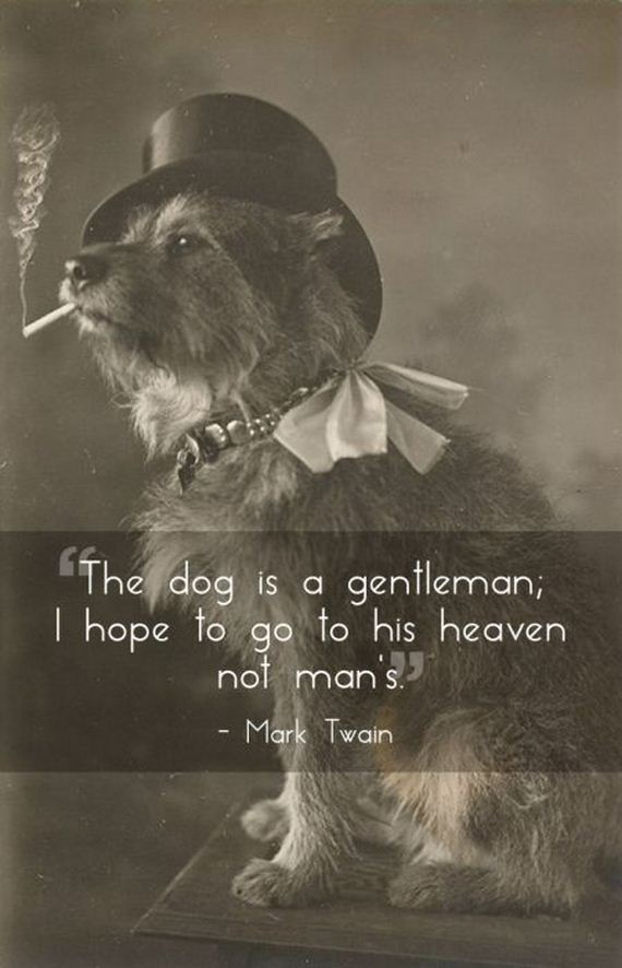 quotes_that_will_make_you_want_to_hug_your_pet