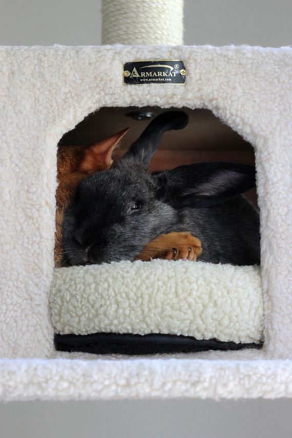 rescued-cat-and-rescued-rabbit-are-best-friend