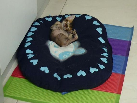 rescued-kitten