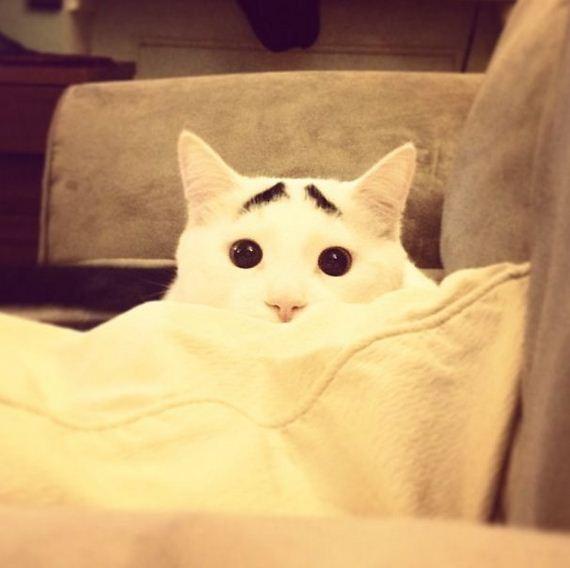 samhas_eye_brows