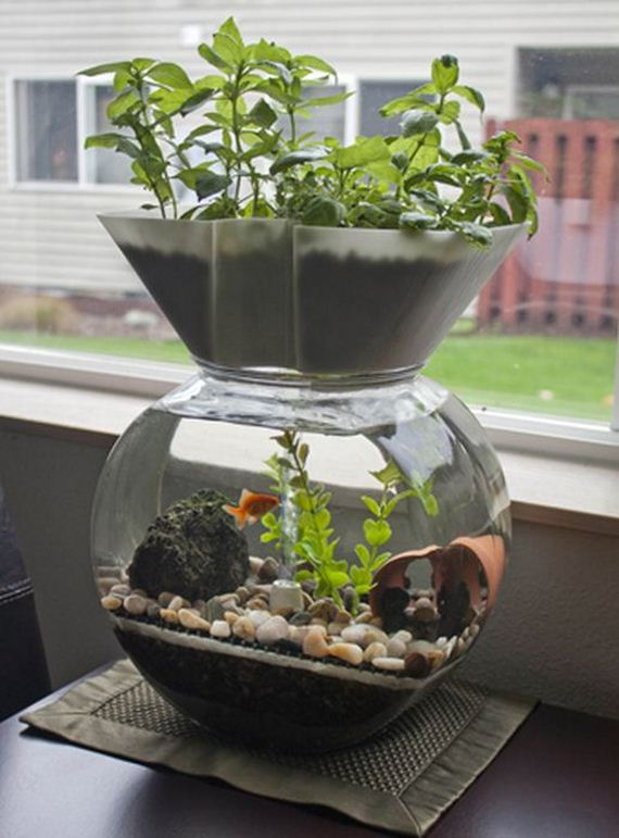 self-cleaning-aquaponic-aquarium