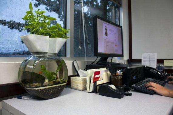 self-cleaning-aquaponic-aquarium