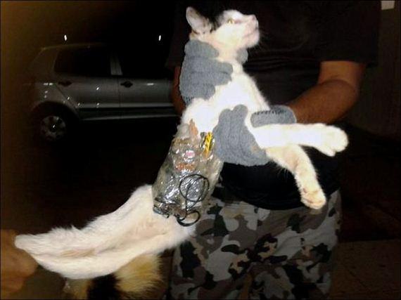 smuggler-cat