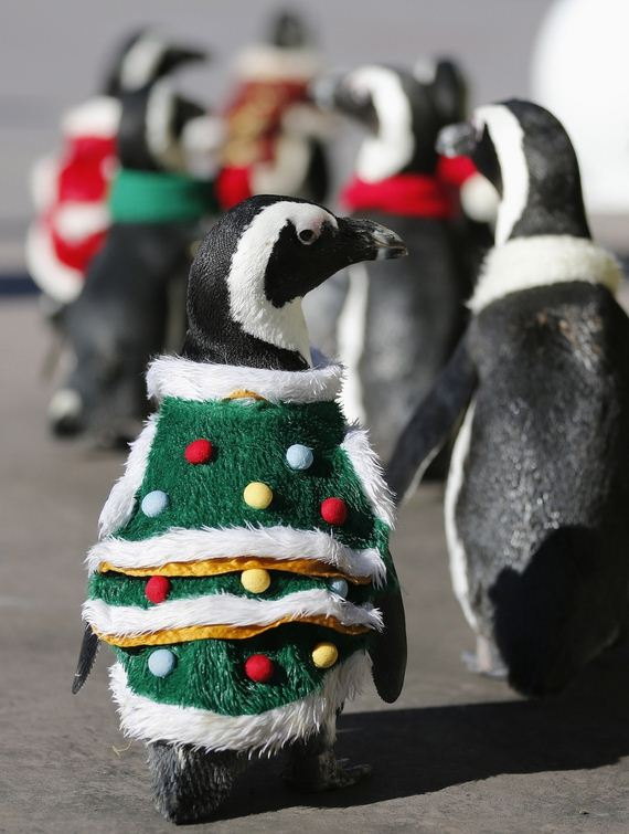 Some Penguins Dressed Up In Christmas Outfits - Barnorama