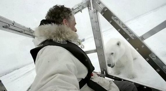 spectacular-polar-bear-attack