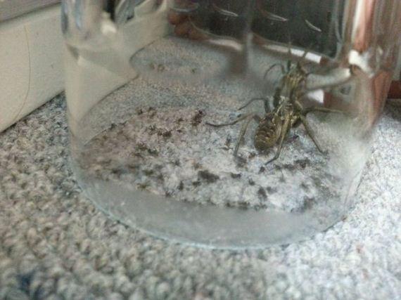 spider_scare
