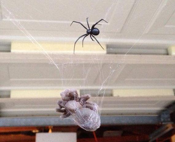 tarantula_vs_black_widow