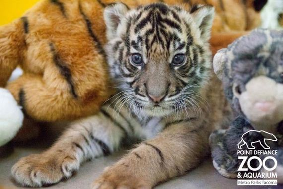 the-cutest-baby-animal-pictures