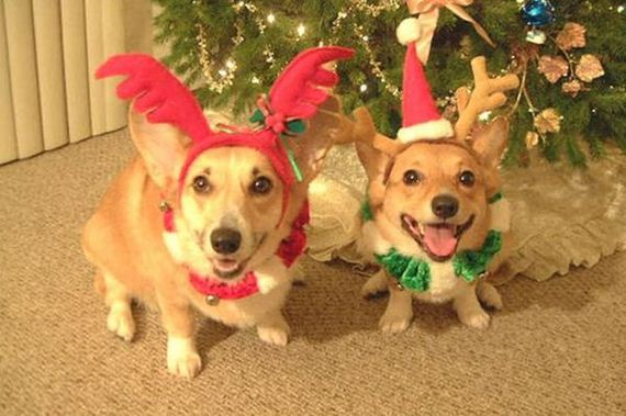 these-dogs-hate-christmas