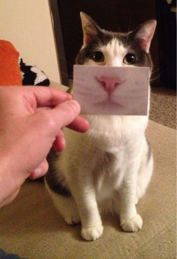 these_funny_animals-2