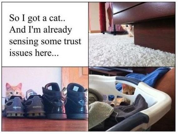 things_all_cat_owners_will_relate_to