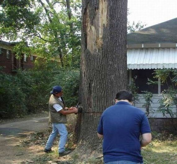 tree-cutting-fail