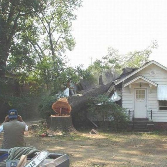 """tree-cutting-fail/"