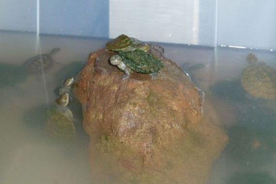 turtles_rescue