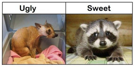 ugly_vs_sweet