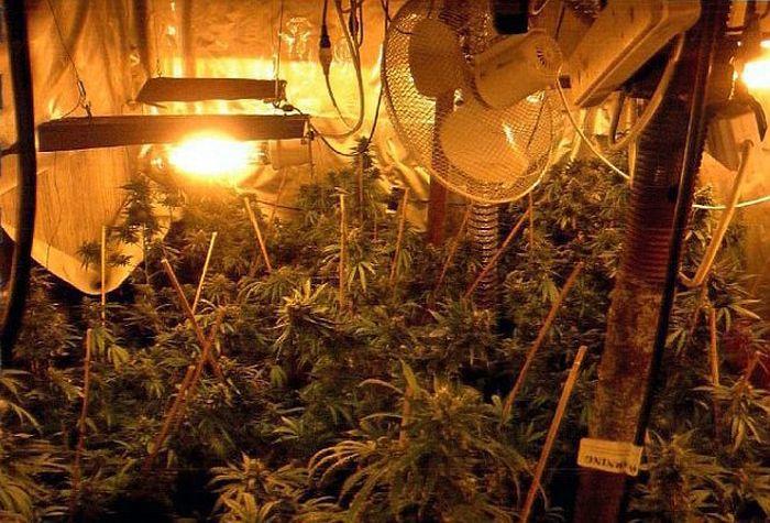 underground_cannabis_farm_patio
