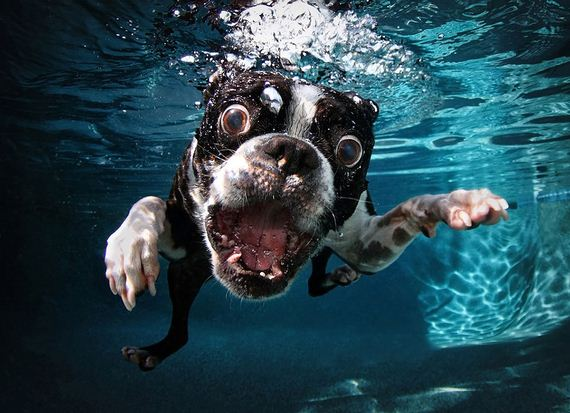 underwater-dogs-are-adorably-terrifying