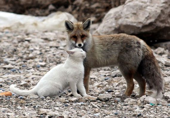 wild-cat-and-fox-are-best