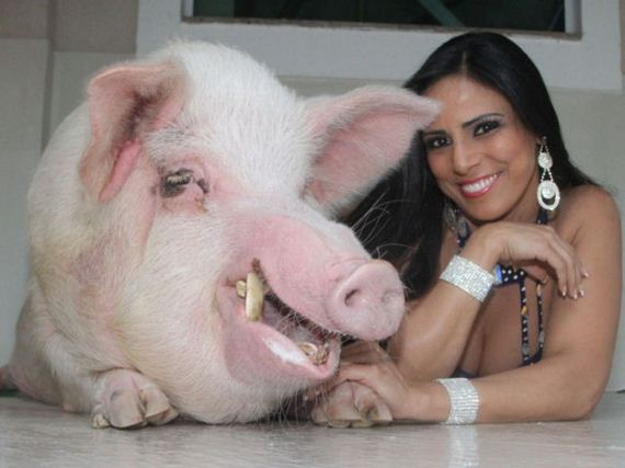 would_you_keep_a_250kg_pet_pig