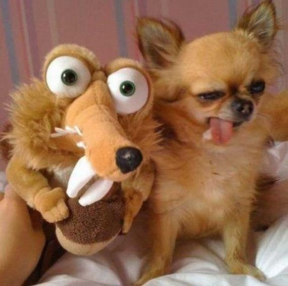 wtf-and-funny-animal-pics-of-the-year