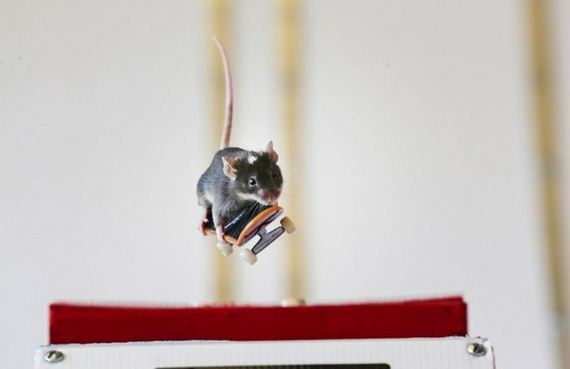 you_have_to_see_these_pictures_of_skateboarding_mice