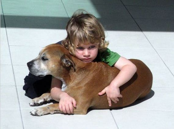 A-Dogs-Purpose-Imgur