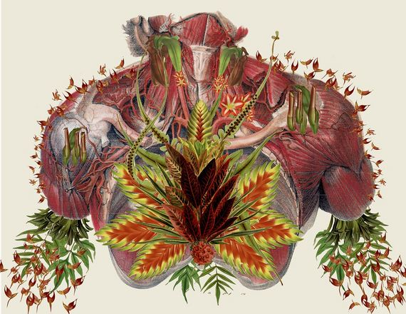 Anatomical-Collages