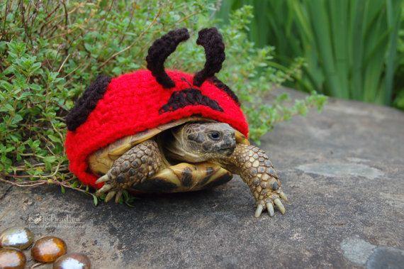 Artist-Crochets-Tortoises