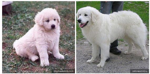 Awesome-Dog-Breeds