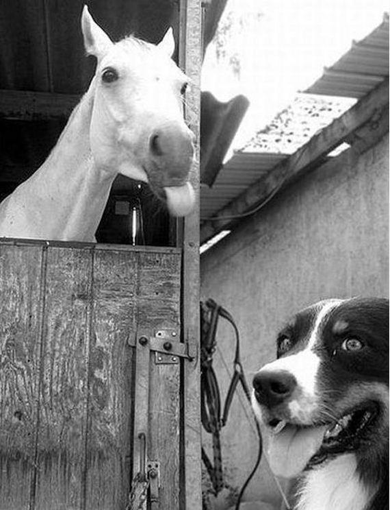 Best-Animal-Photobombs