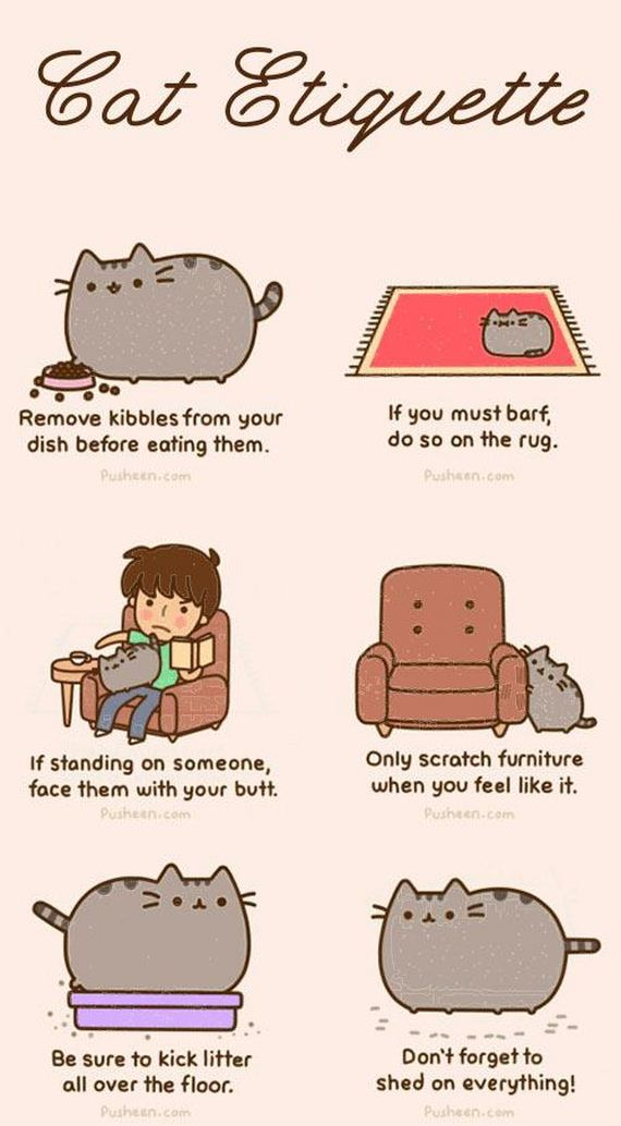 Cat-Owners-Will-Understand