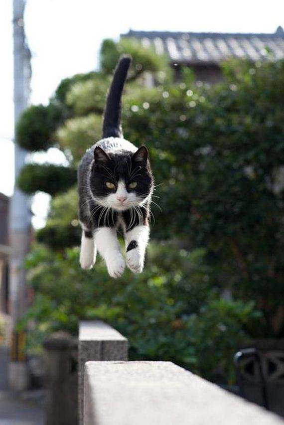 Cats-Caught-Hovering