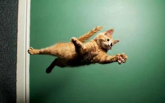 Cats Caught Hovering In Mid Air Barnorama