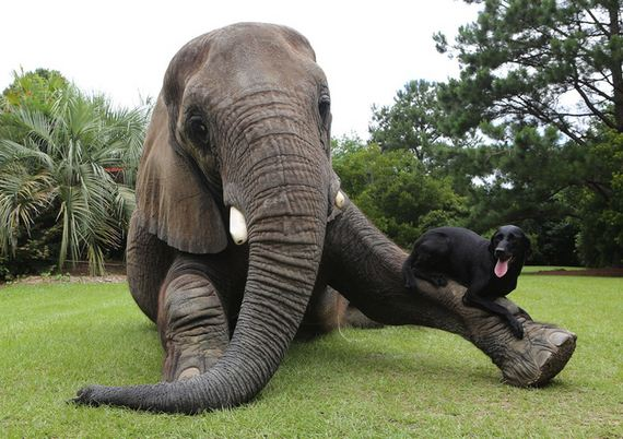 Friendship-Dog-And-Elephant