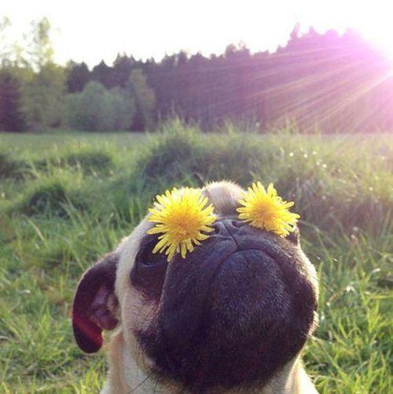 LOL-Animal-Pics
