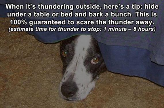 Life-Hacks-Dogs