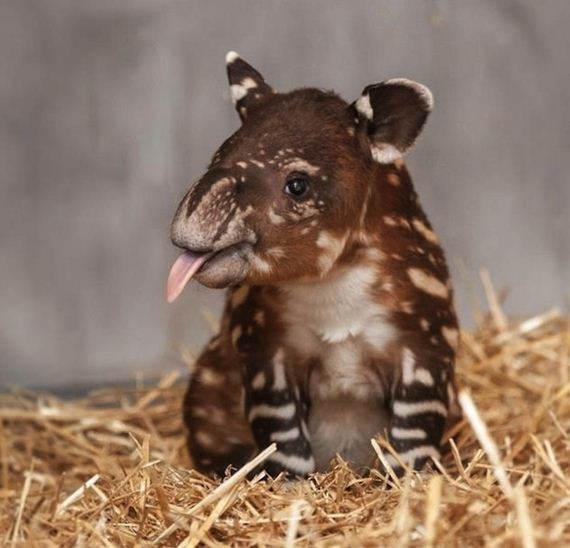 Most-Adorable-Baby-Animal