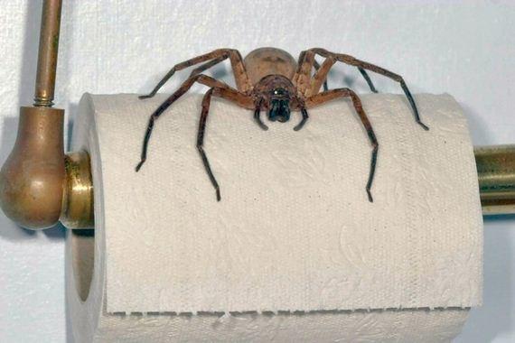 Reasons-Why-Arachnophobes
