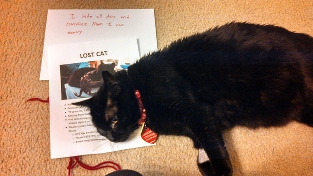Signs-Your-Cat