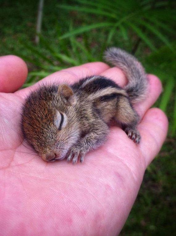 abandoned_squirrel_sri_lanka_paul_williams