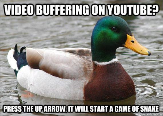 actual_advice_mallards