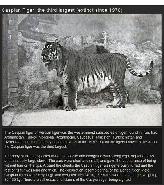 amazing_extinct_animals