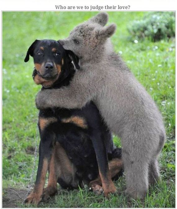 animals_hugging