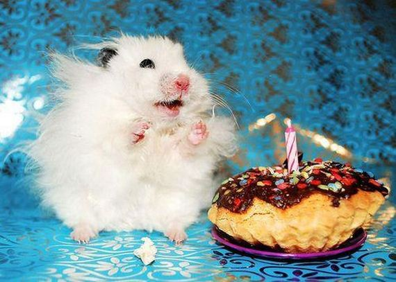 animals_that_are_having_the_best_birthday_ever